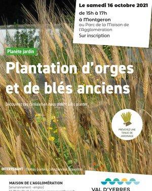 Plantation d'orges et blés anciens