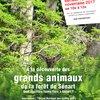 image de l'événement : SORTIE NATURE : À la découverte des grands animaux de la forêt de Sénart