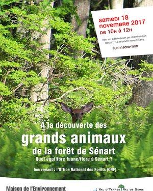 SORTIE NATURE : À la découverte des grands animaux de la forêt de Sénart