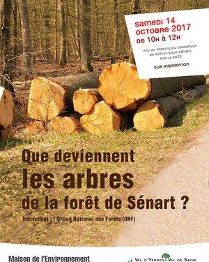 Sortie Nature : Que deviennent les arbres de la Forêt de Sénart ?