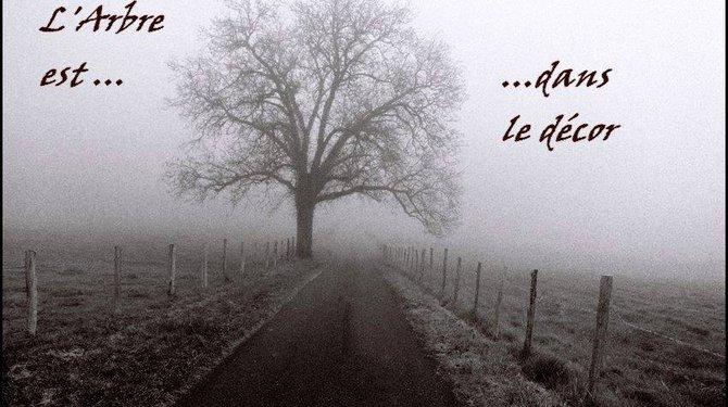 """Exposition de photographies """"L'arbre est dans le décor"""""""