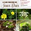image de l'événement : Sortie botanique « la flore forestière des sous bois »