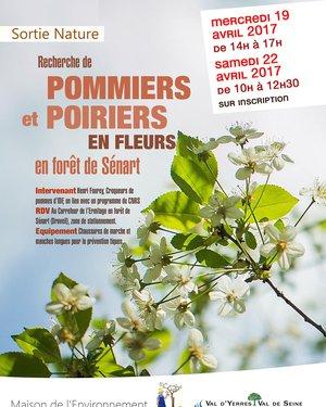 Sortie Nature  Recherche de pommiers et poiriers en fleurs en forêt de Sénart