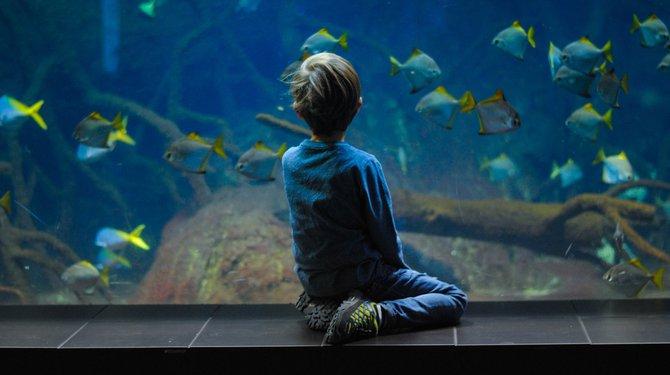 Petits aquariums en boîte - Atelier des P'tits Artistes
