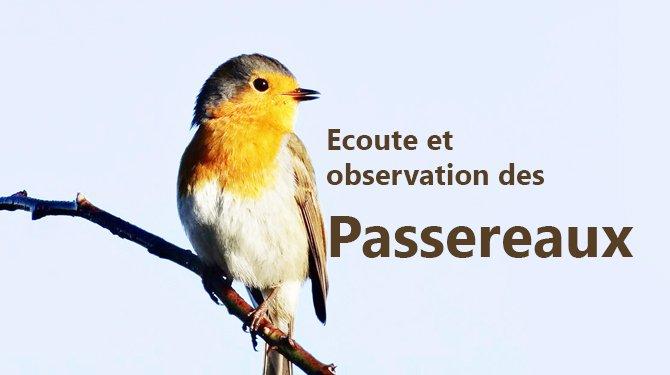 Ecoute et observation des passereaux en bord de rivière